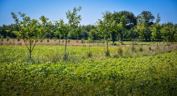 Agro-oihangintza%20udaberriaren%20zain